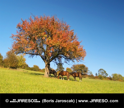 Kone pod stromom v predvečernej hodine