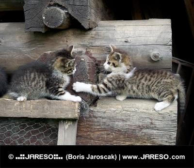 Mačiatka sa hrajú na poukladanom dreve